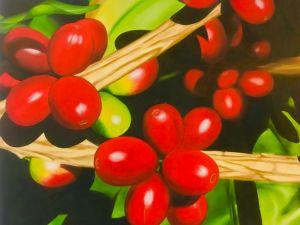 Representação artística dos frutos de café